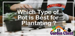 Read more about the article Which type of pot is best for planting?