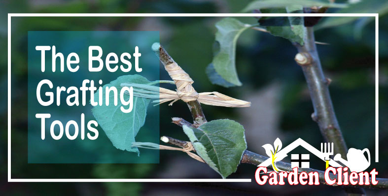 Read more about the article The Best Grafting Tools For Your Garden