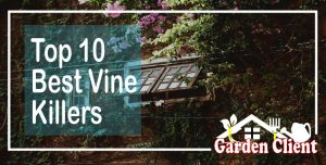 Read more about the article Top 10 Best Vine Killers of 2021