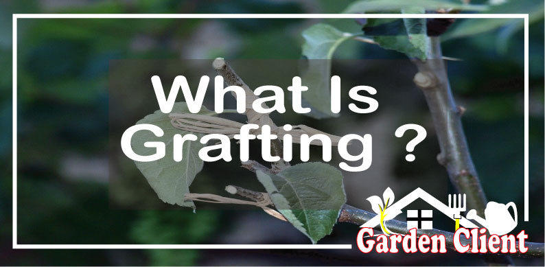 You are currently viewing What Is Grafting?